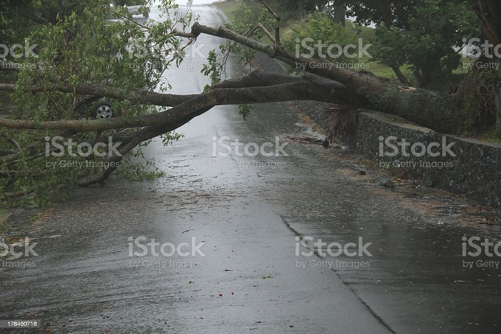 Trees fallen across road during  tropical cyclone Oswald stock photo