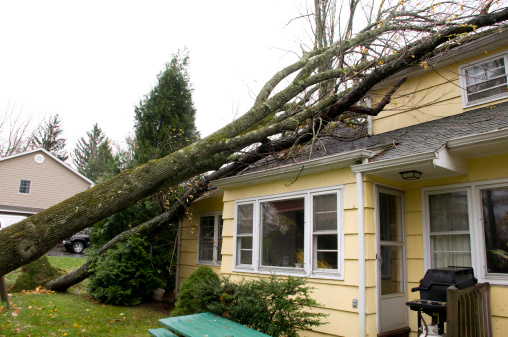 NEW JERSEY, USA, October 2012 - Residential home damage caused by trees falling on roof, a result of the high velocity winds of Hurricane Sandy.