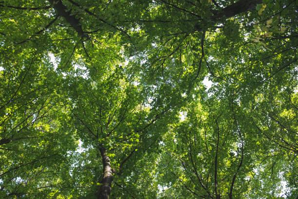 trees foliage - low angle view foto e immagini stock