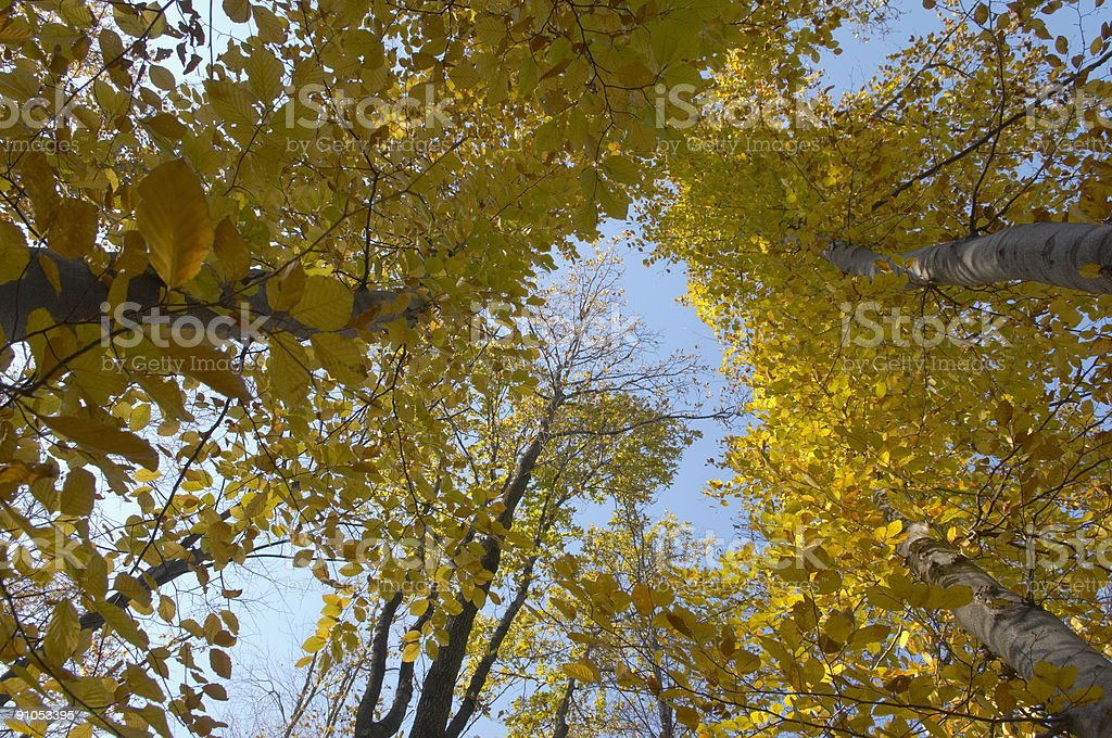 trees from low angle royalty-free stock photo