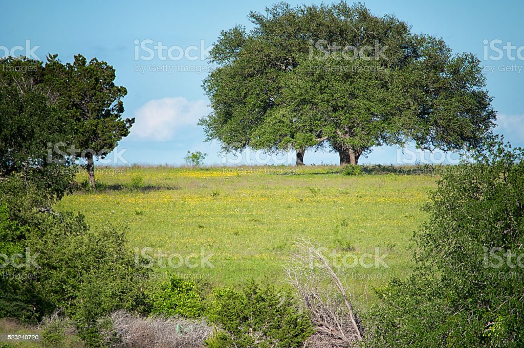 Trees & Grassy Clearing stock photo