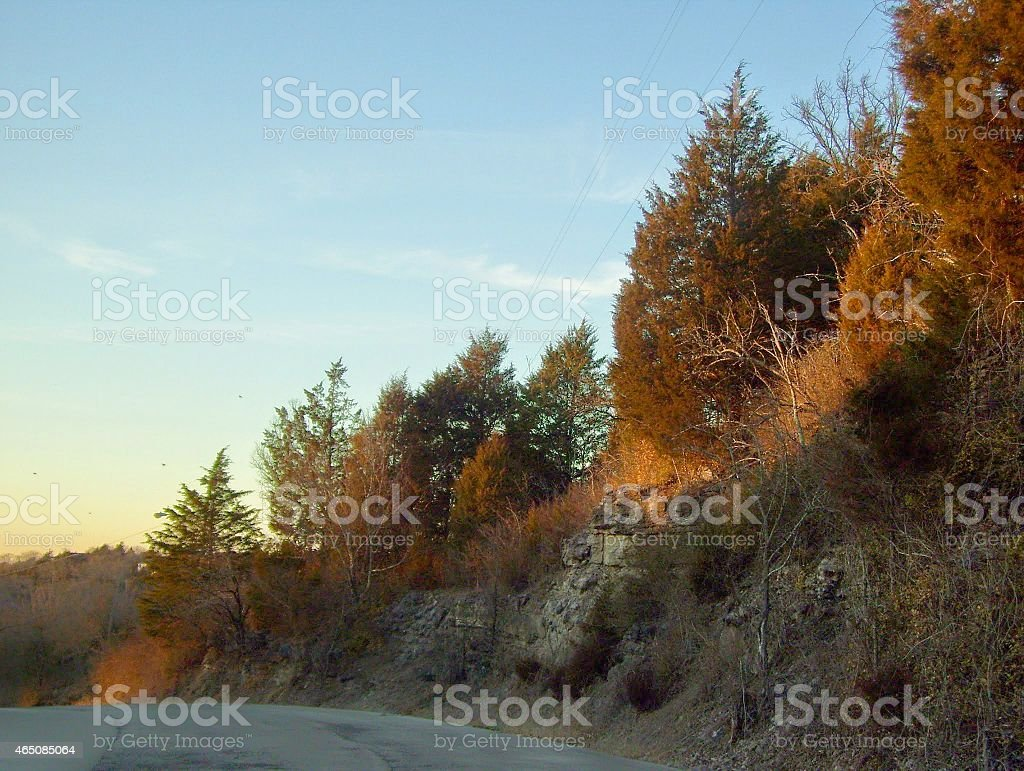 Trees Growing on a Bank with Rocks stock photo
