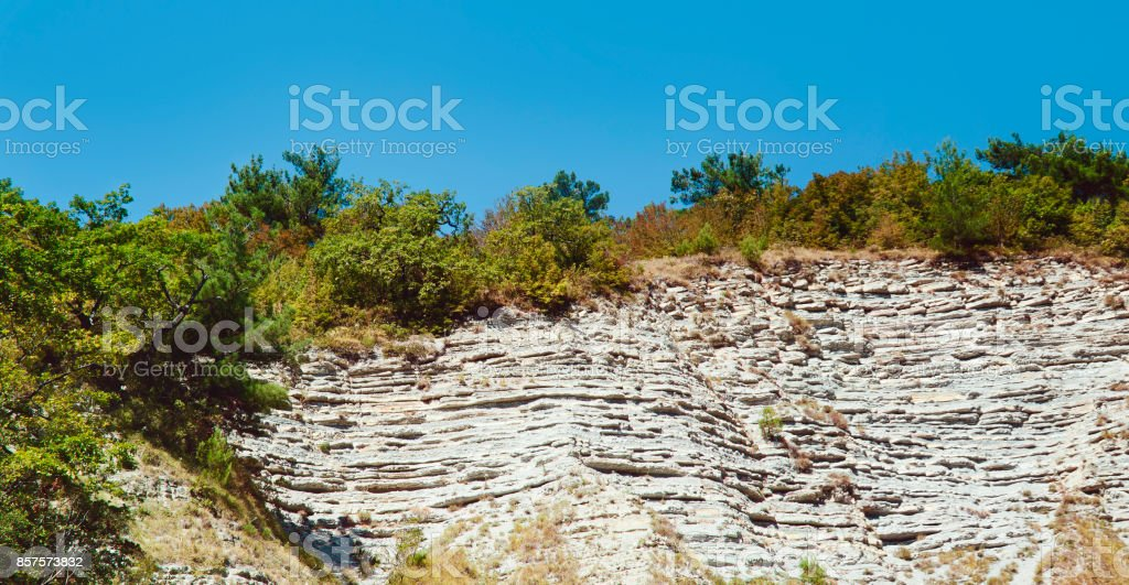 Trees growing on a rock and stones. stock photo