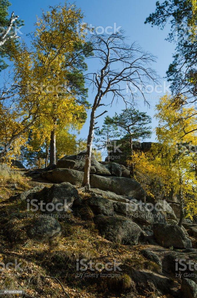 Trees growing on a rocky cliff photo libre de droits