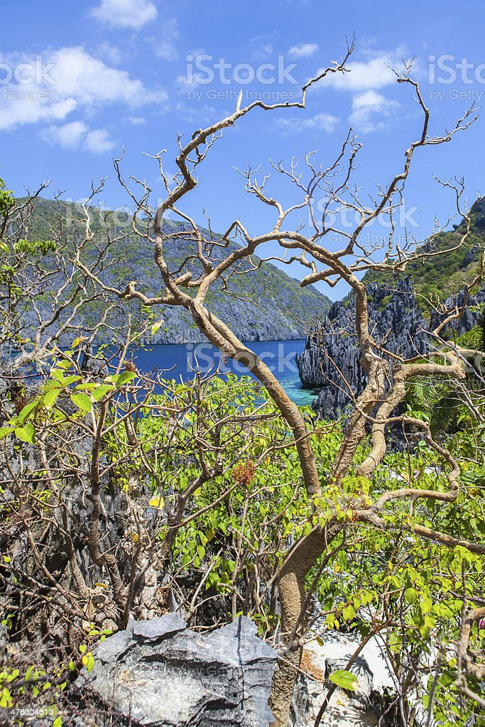 Trees growing on rocks royalty-free stock photo