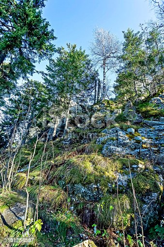 trees growing on the rocks near the Taganay ridge in the southern Urals