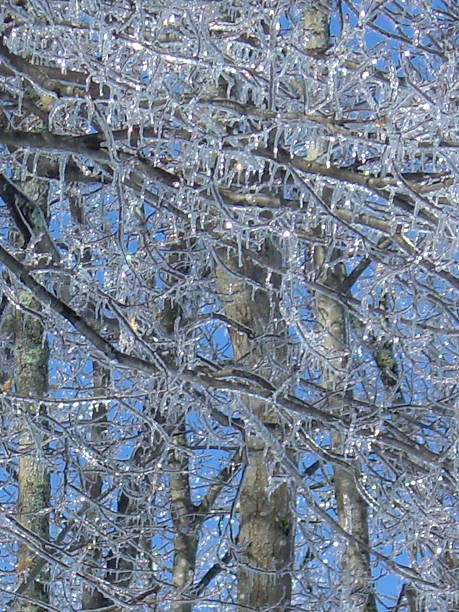 Trees, Icicles and Blue Sky stock photo
