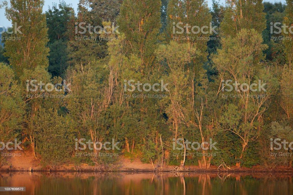 Trees illuminated by the evening sun. stock photo