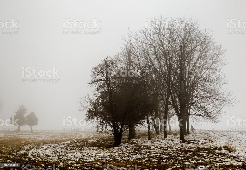 Trees In A Farm Field In Fog stock photo