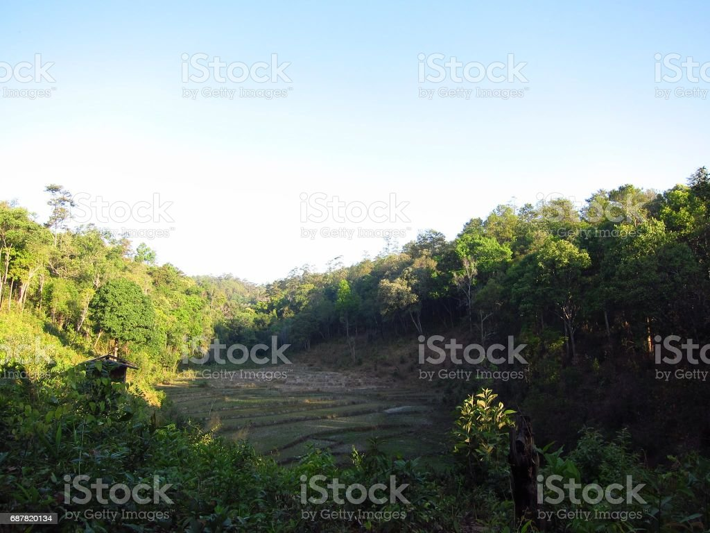 Trees in a field in Thailand stock photo