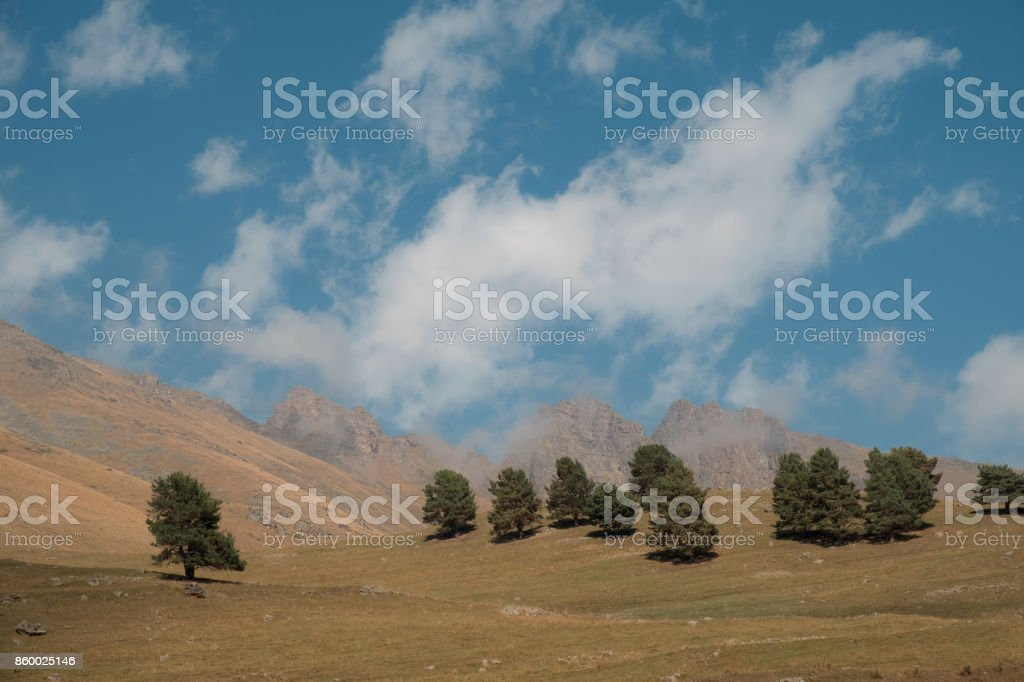 trees in a field on a hill at the backdrop of mountain stock photo