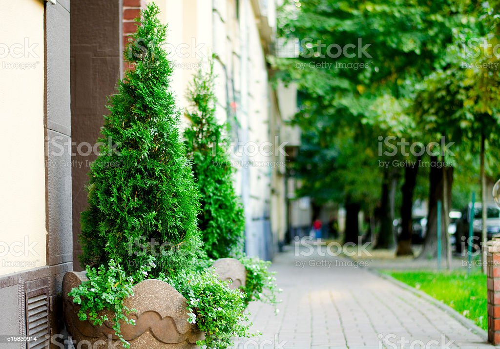 Trees in a flowerpot on brick wall background stock photo