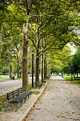 trees in a park in New York City