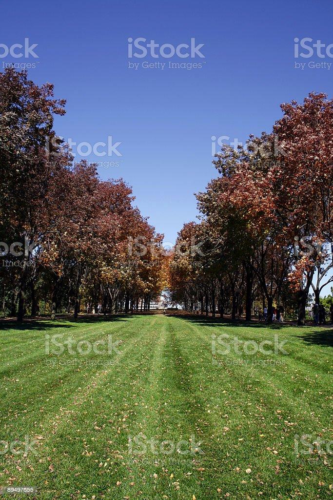Trees in a Park royaltyfri bildbanksbilder