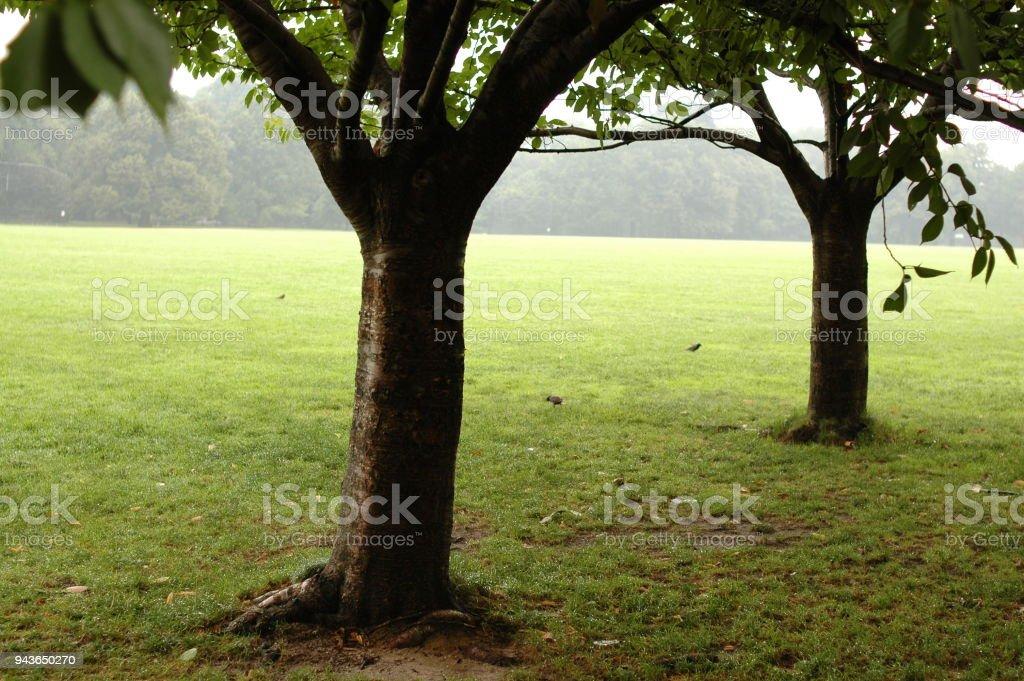 나무를 파크 스톡 사진