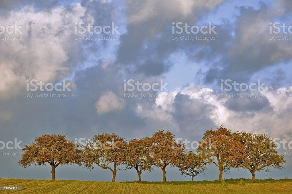 Trees in a Row. royalty-free stock photo