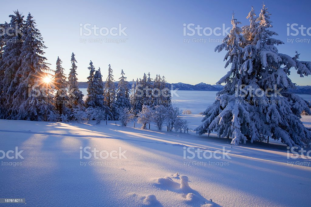 trees in a snow covered winter landscape royalty-free stock photo