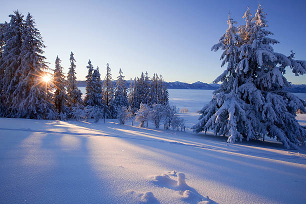 trees in a snow covered winter landscape stock photo