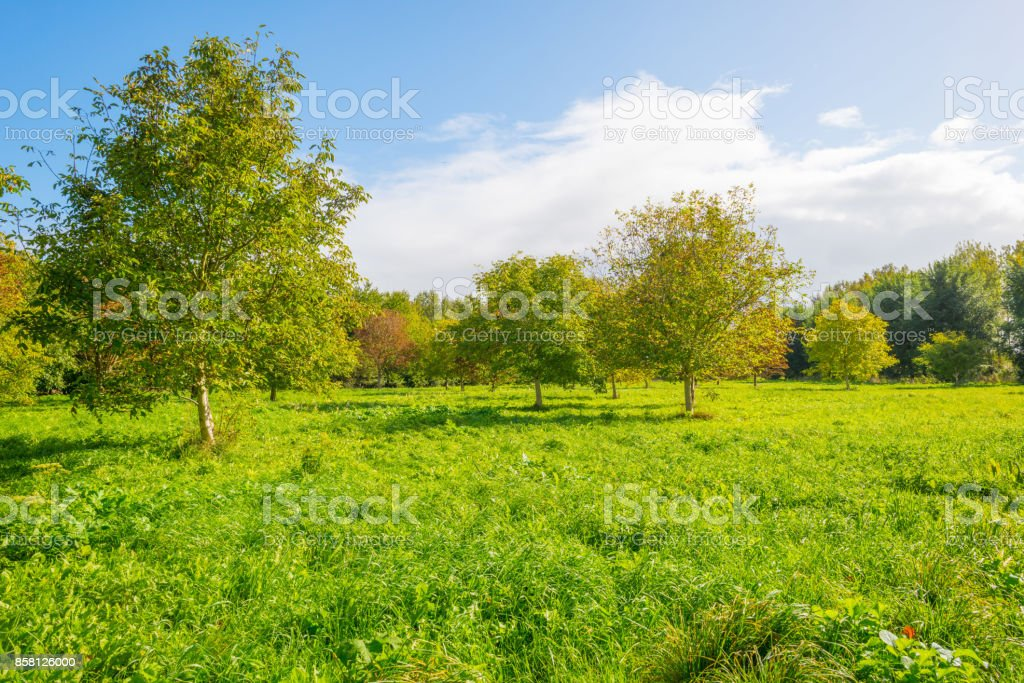 Trees in a sunny field below a blue cloudy sky in autumn stock photo