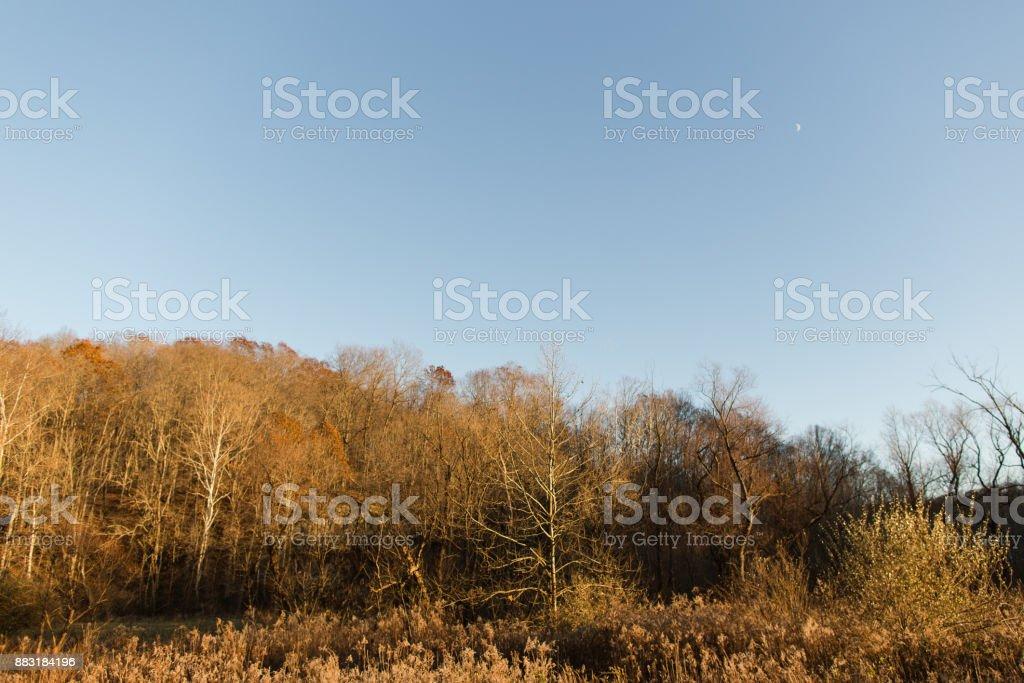 Trees in Athens, Ohio stock photo