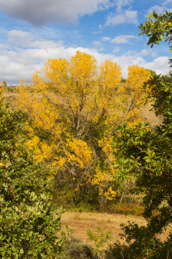 Trees in Autumn - Arboles en Otoño