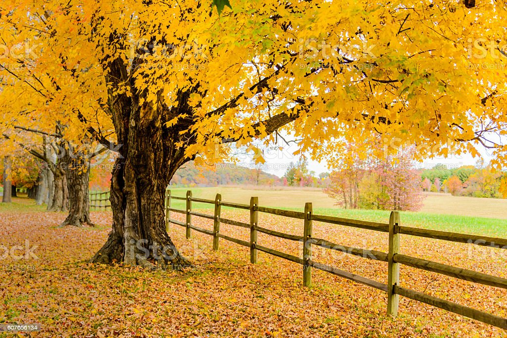 Trees in autumn colors along a wooden fence stock photo