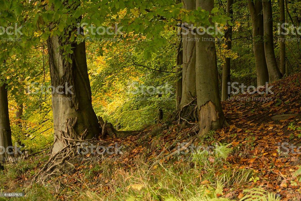 Trees in Autumn stock photo