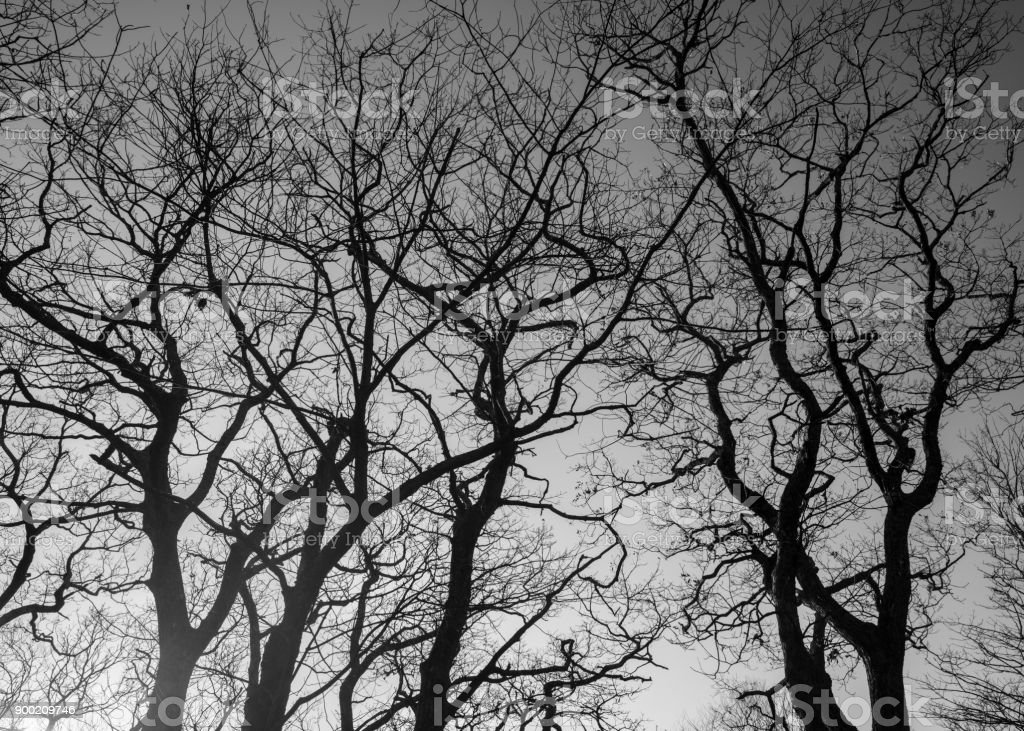 Trees in black and white stock photo