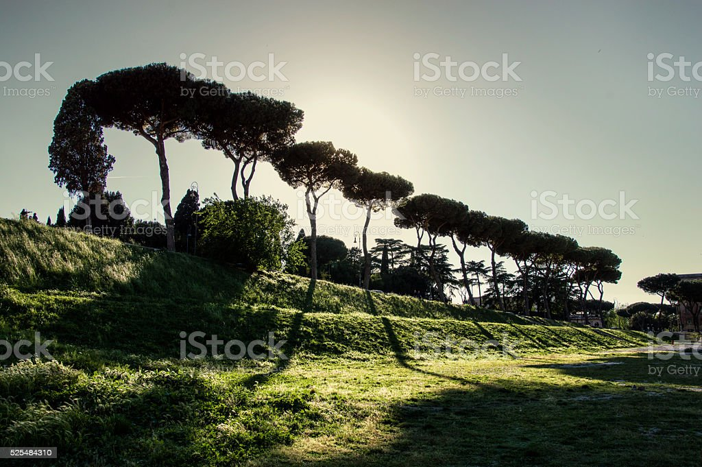 Trees in Circo Massimo, Rome stock photo