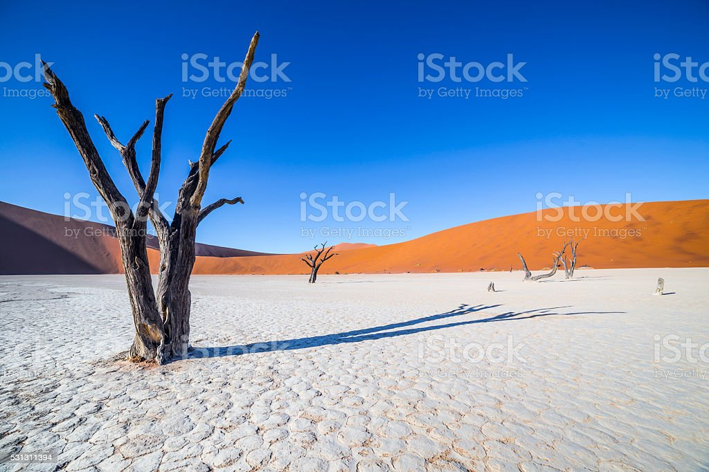 Trees in Deadvlei, or Dead Vlei, in Sossusvlei, Namibia stock photo
