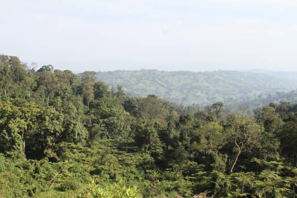 Trees in Ethiopia stock photo