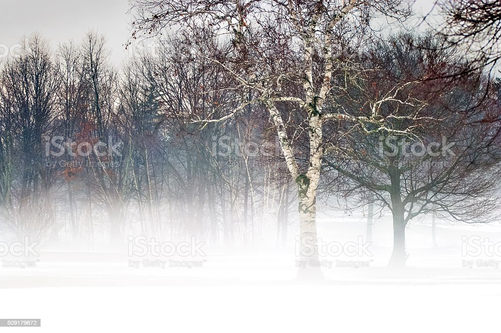 Trees In Fog And Snow stock photo