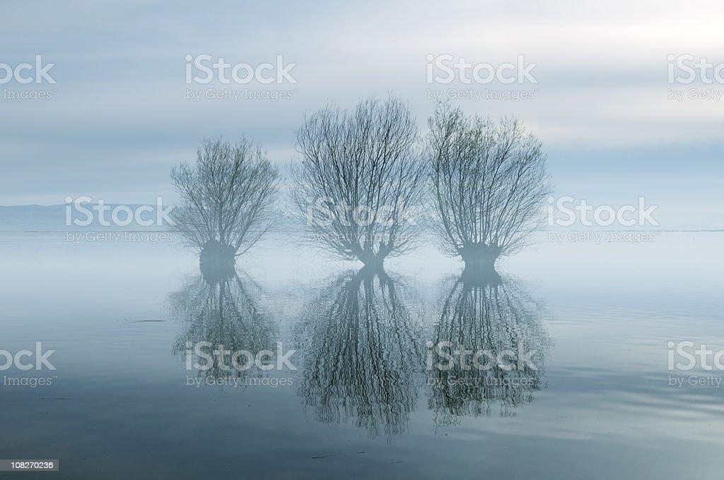 Trees in Foggy Lake, Civril, Denizli, Turkey stock photo