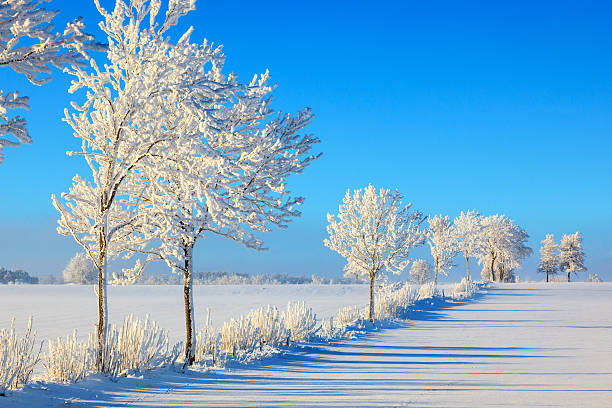 arbres en frost - arbre à feuilles caduques photos et images de collection