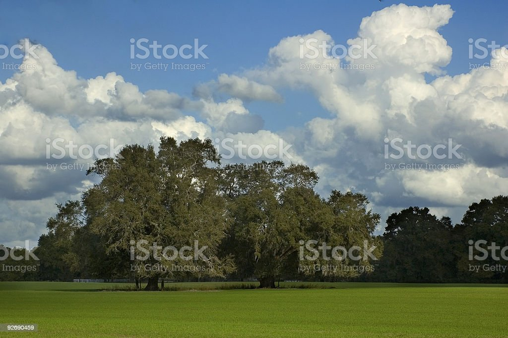 Trees in Grass Field stock photo
