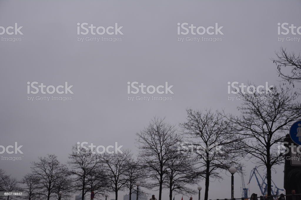 Trees in Hamburg stock photo