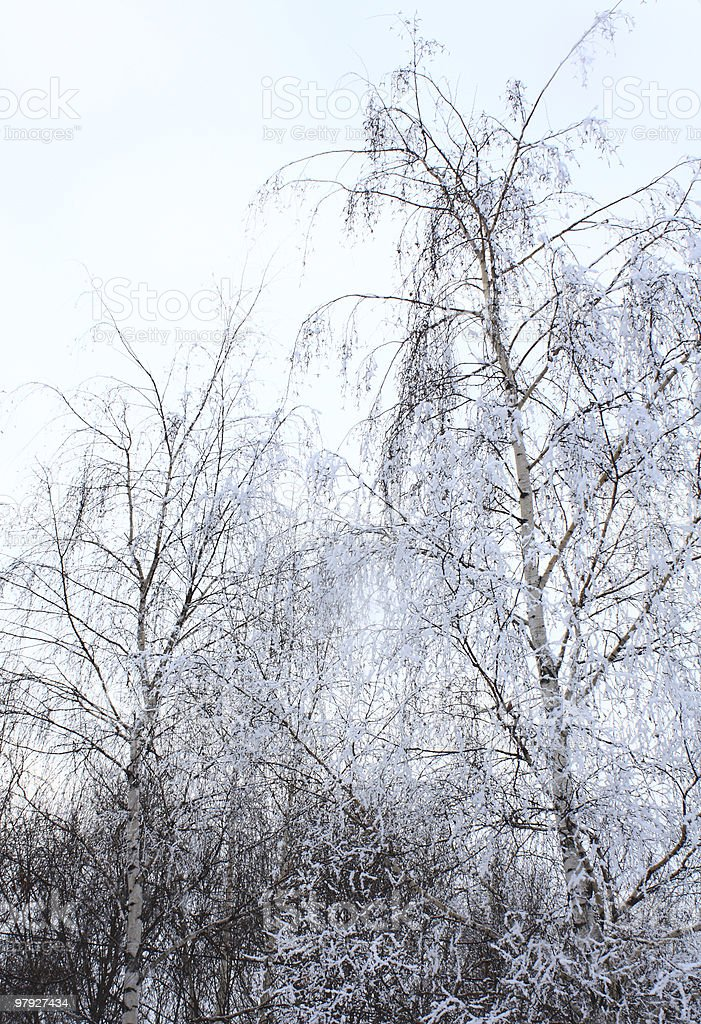 trees in hoarfrost royalty-free stock photo