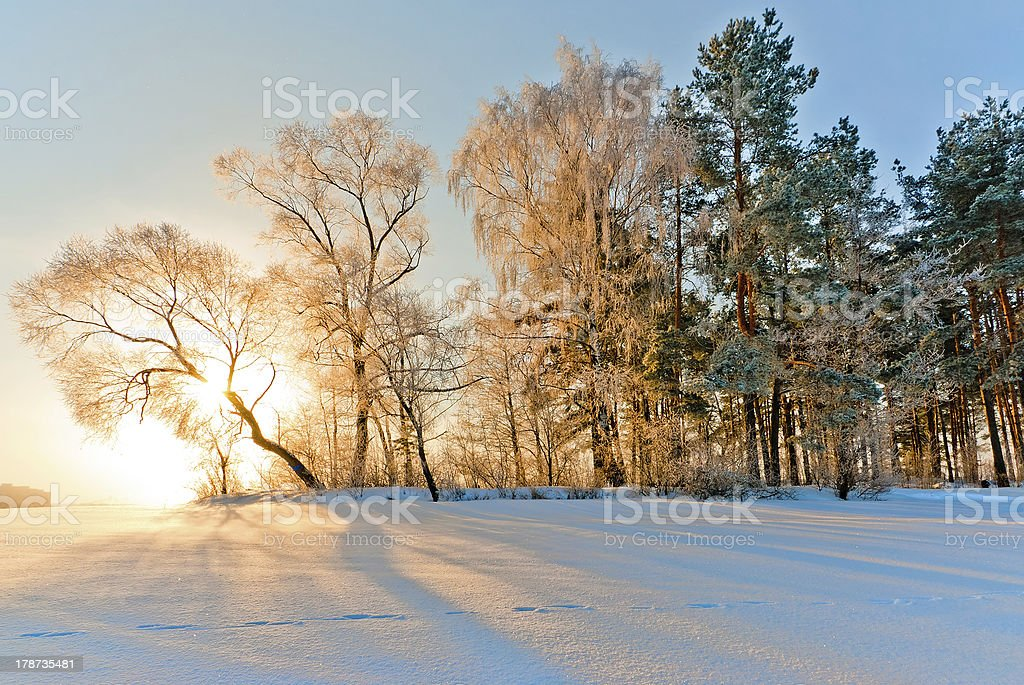 Trees in inei royalty-free stock photo