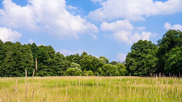 trees in landscape beautiful green treeline in summertime treelined stock pictures, royalty-free photos & images