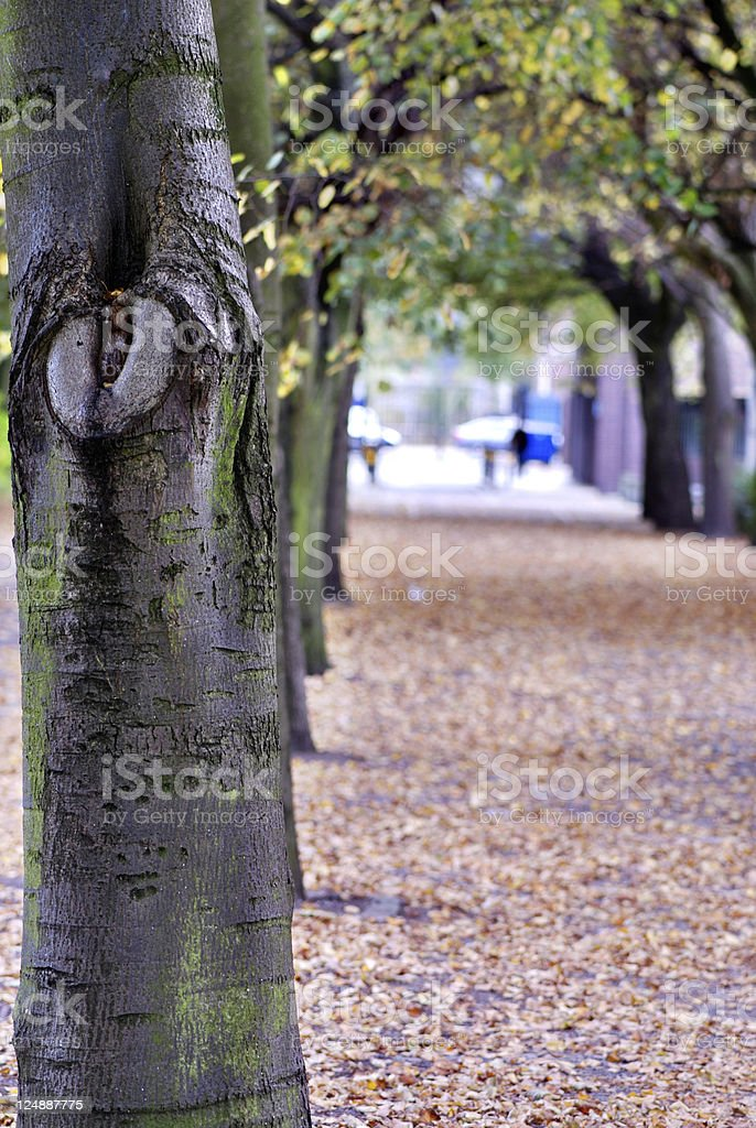 Trees in line royalty-free stock photo