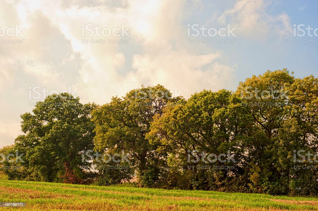 Trees in line stock photo