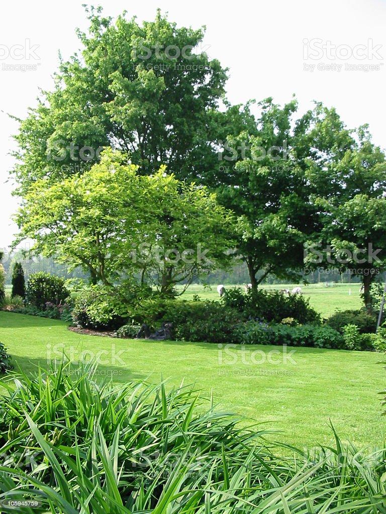 Trees in my garden stock photo