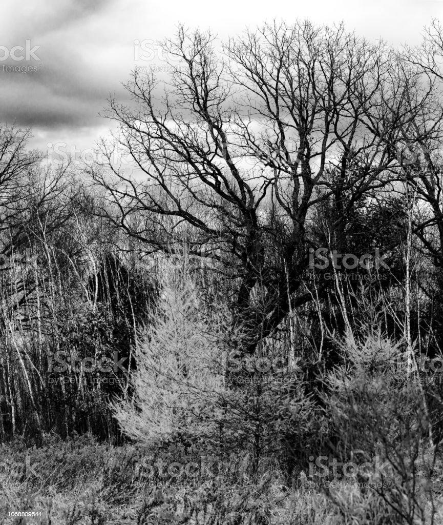 Árvores em novembro em preto e branco - foto de acervo