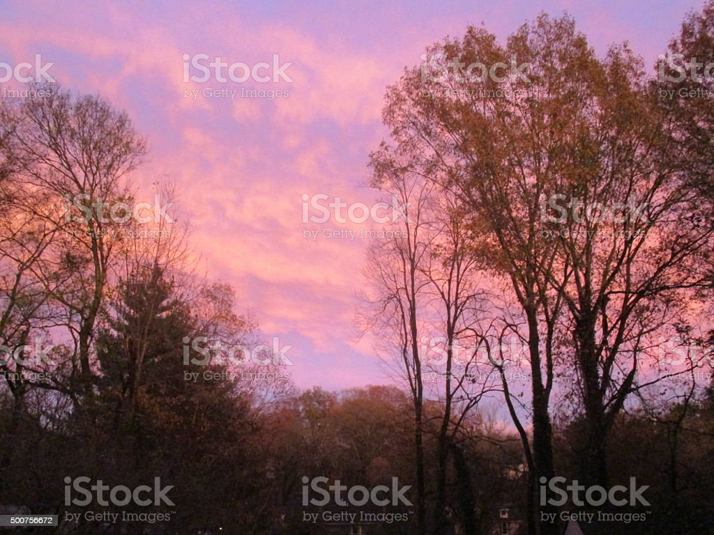 Trees in Partial Silhouette Against the Eastern Sky During Sunset stock photo
