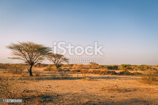 istock Trees in plains of Africa 1137955454
