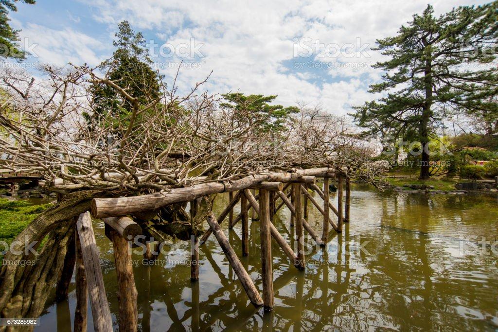 Bäume im Teich – Foto