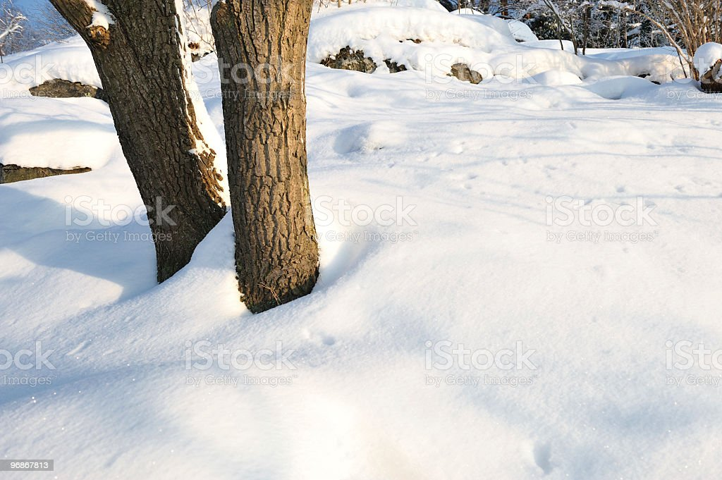 Trees in snow and sunshine stock photo
