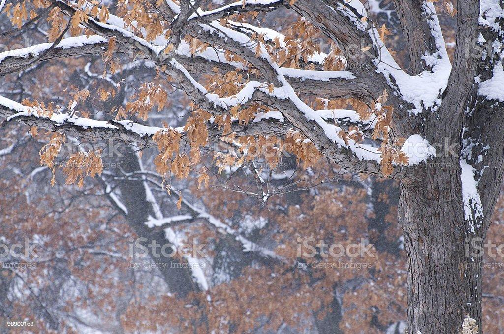 Trees in Snowfall royalty-free stock photo