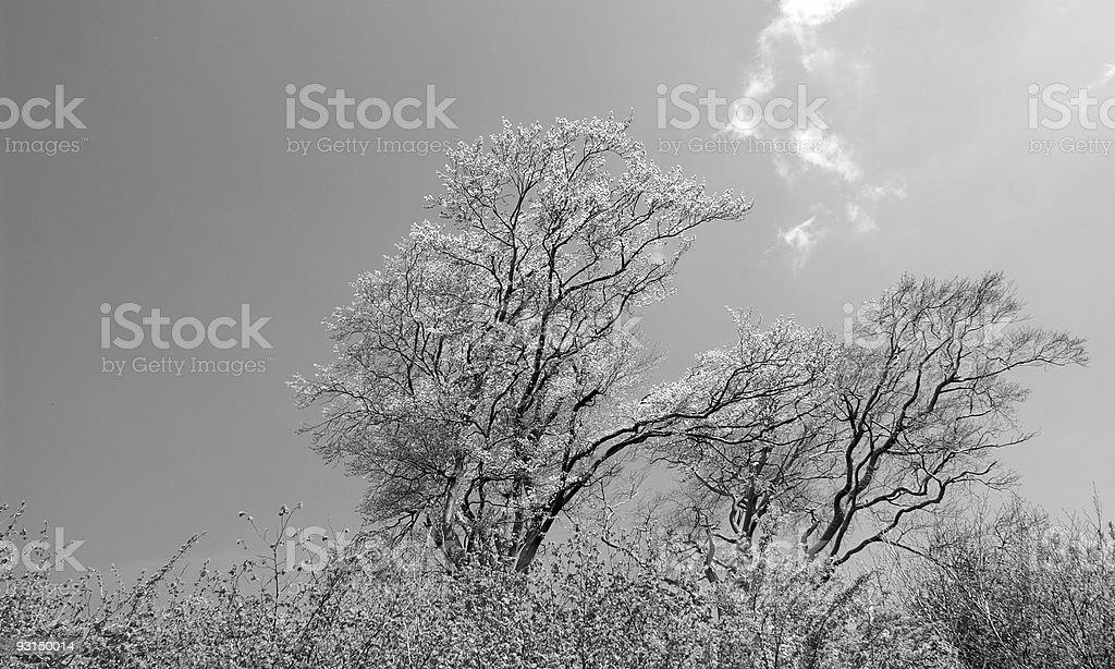 Trees in Spring stock photo
