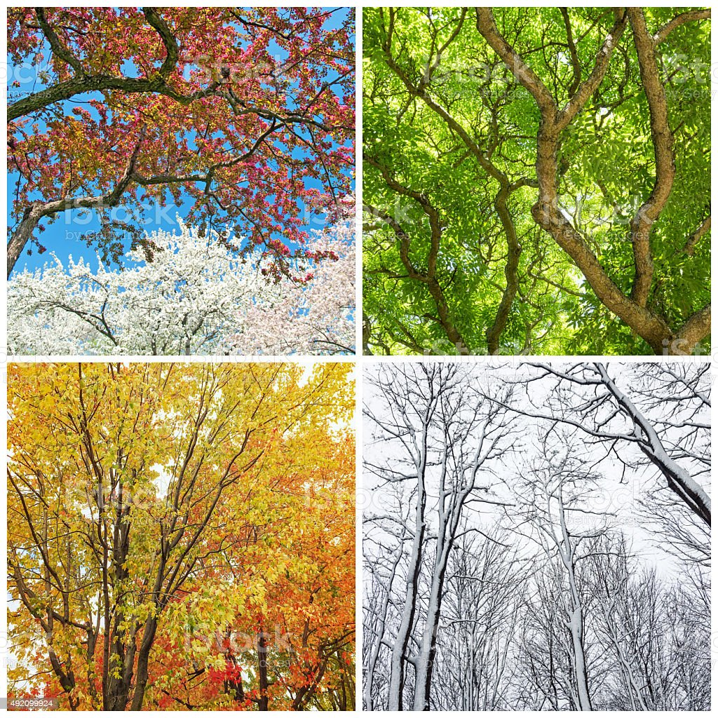 Trees in spring, summer, autumn and winter stock photo